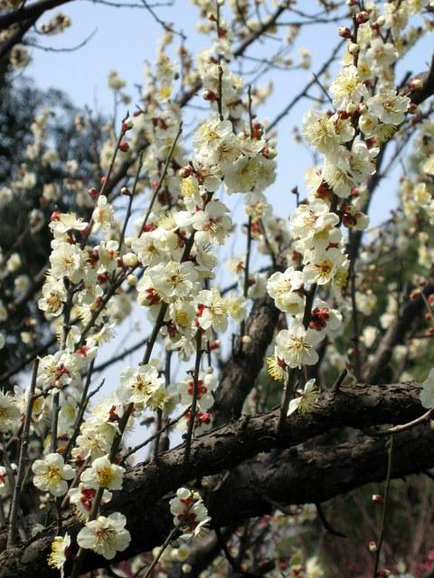 2008-03-04-057.jpg