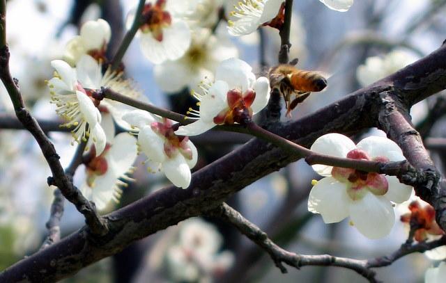 2008-03-04-071.jpg