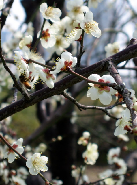 2008-03-04-072.jpg